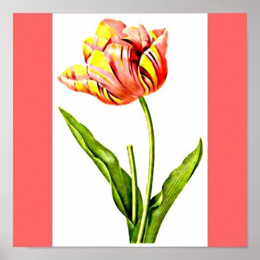 Poster-Botanicals-Pierre Joseph Redoute 22