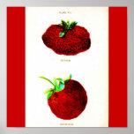 Poster-Botanicals-Strawberries 6