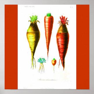 Poster-Botanicals-Zanahoria
