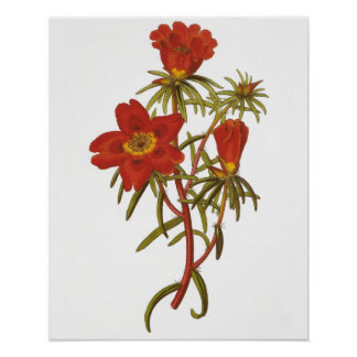Poster botánico del vintage