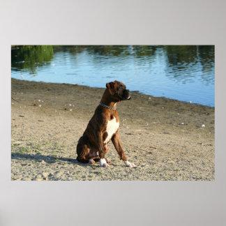 Poster Brindle del perrito del boxeador