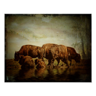 Poster-Buffalo at the Watering Hole