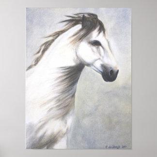 Poster - caballo blanco