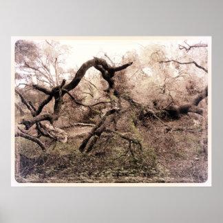 Poster caido del árbol