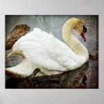 Poster-Cante con el cisne
