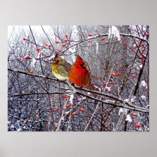 Poster cardinal del bosque