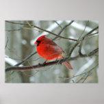 Poster cardinal rojo del invierno