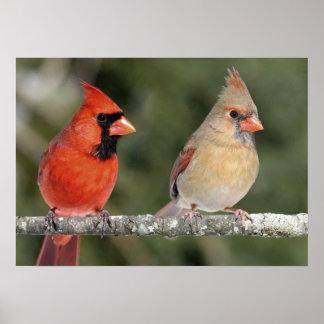 Poster cardinal septentrional de la fotografía