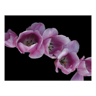 Poster, Cascade of Purple Tulips Poster