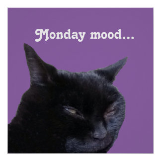 Poster cat Monday mood by Billy Bernie