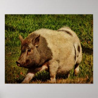 Poster-Cerdo en el funcionamiento