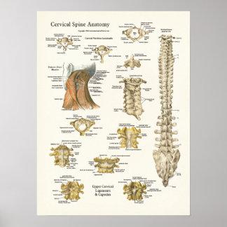 Poster cervical de la anatomía de la espina dorsal