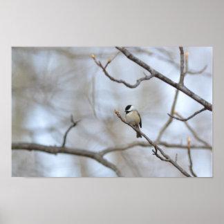 Poster: Chickadee en último invierno