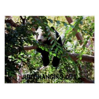 Poster chistoso de la panda del bebé