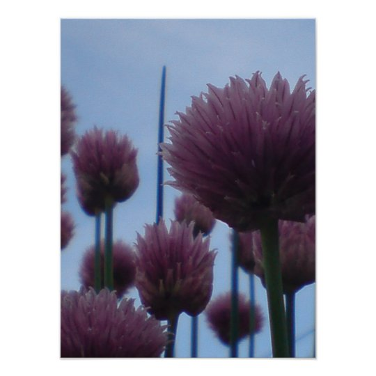 Poster - Chives    Image 1