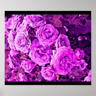 Poster-Color 102 Terapia-Púrpuras Póster
