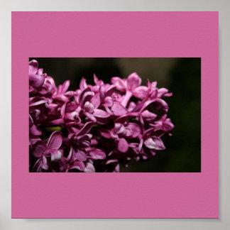 Poster-Color 11 Terapia-Púrpuras Póster