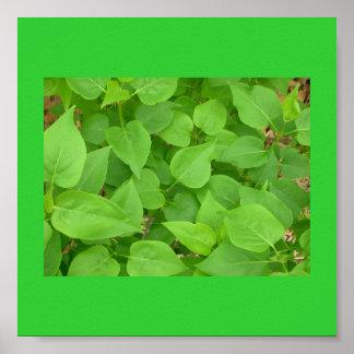 Poster-Color 11 Terapia-Verdes Póster