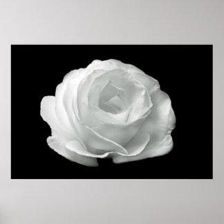 Poster color de rosa blanco y negro