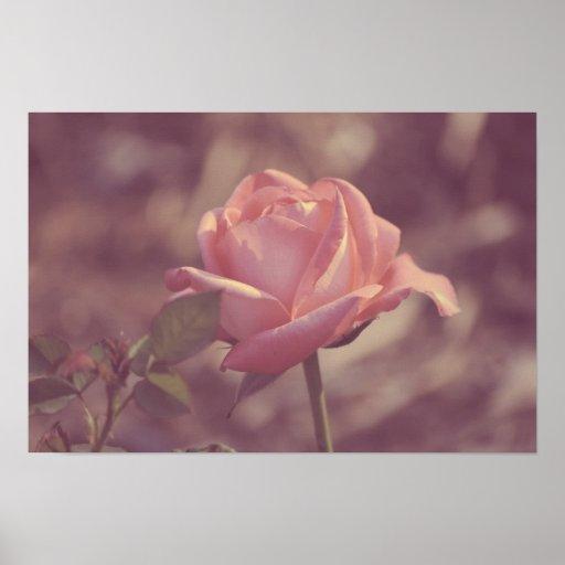 Poster color de rosa descolorado