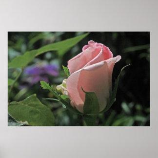 Poster color de rosa ideal del brote de la novia