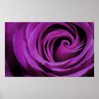 Poster color de rosa púrpura