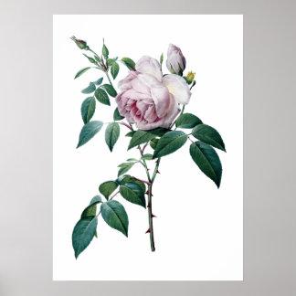 Poster color de rosa rosado