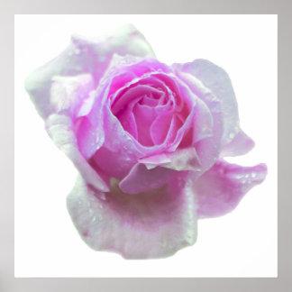 Poster color de rosa rosado bonito