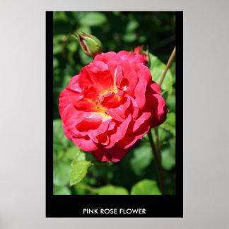 Poster color de rosa rosado de la flor, impresión