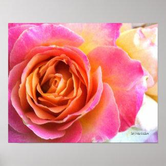 Poster color de rosa rosado delicado