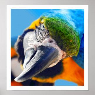 Poster colorido curioso del Macaw