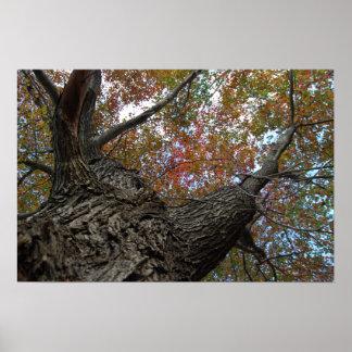 Poster colorido de las hojas
