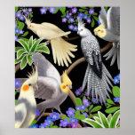 Poster colorido de los Cockatiels