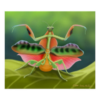 Poster colorido del insecto de la mantis religiosa