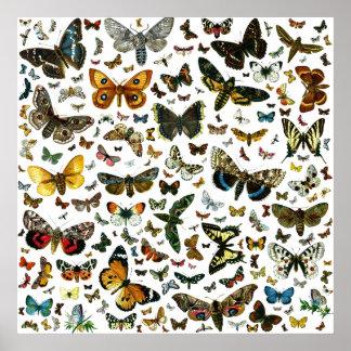 Poster colosal de la mariposa