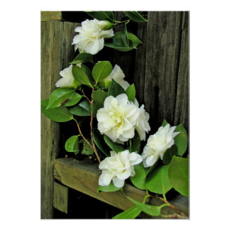 Poster, Composition with White Camellias #3P Poster