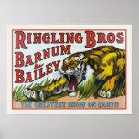 Poster con la impresión del tigre del circo del vi