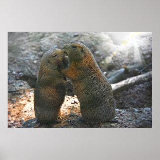 Poster con los pares lindos de la marmota