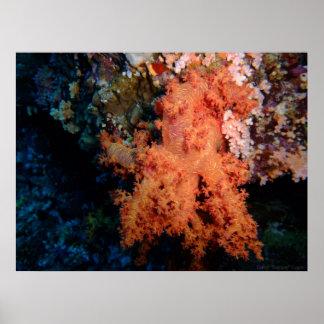 Poster coralino 2 del clavel