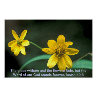 Poster - Coreopsis with text