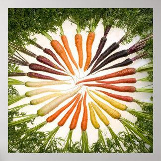 Poster cuadrado de las zanahorias multicoloras del