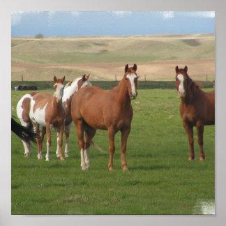 Poster cuarto de la manada del caballo