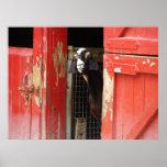 Poster curioso de la cabra