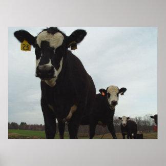 Poster curioso de las vacas 2