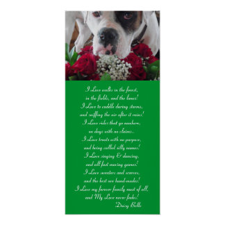 Poster Daisy Belle & Roses Promote Pet Adoption!