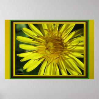 Poster - Dandelion Flower