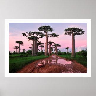 poster de África del bosque del baobab a partir de