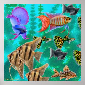 Poster de agua dulce de los pescados del acuario