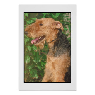 Poster de Airedale Terrier