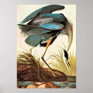 Poster de Audubon del vintage